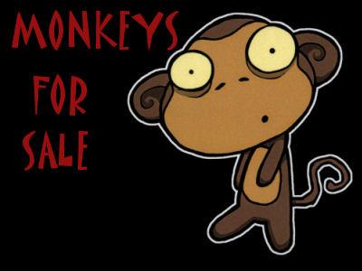 monkeys-for-sale[1]
